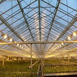 Multi - invernadero agrícola doble de la película plástica del palmo