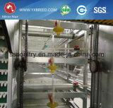 H pulsa la jaula galvanizada caliente o fría de la capa del pollo de la batería