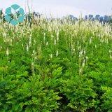 Black Cohosh Extract/Cimicifuga Racemosa Extract/Triterpene Glycosides