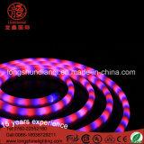 공장 가격 6-10W Ramadan 훈장을%s 빨간 백색 LED 네온 코드 밧줄 빛