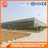 Casa verde de vidro usada Sell da agricultura