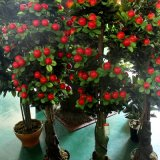 인공적인 사과 나무를 정원사 노릇을 하기