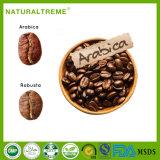 Polvo antienvejecedor del café de las hierbas del Arabica chino del extracto