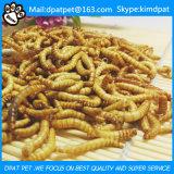Nutrição Mealworms Treats para aves selvagens
