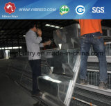 Cages de volaille de couche de modèle de bâti pour la ferme de poulet (A4L160)