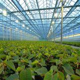 Invernadero agrícola hidropónico de la alta calidad