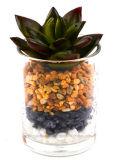 Genres artificiels de Succulent dans le vase en verre avec la pierre pour la décoration dans Home&Office
