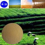 Amminoacidi di verdure di sorgente dell'azoto organico del chelato dell'amminoacido dello Zn