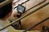Ultra-som popular do veterinário do fabricante
