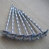 De verdraaide Steel Gegalvaniseerde Spijker van het Dakwerk van de Paddestoel Hoofd
