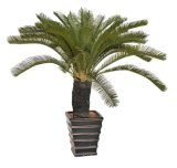 Migliori piante artificiali di vendita di grande Cycas Jf14010823