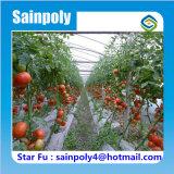Grande estufa agricultural do túnel para tomates