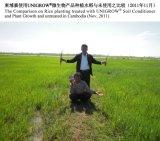 Рис засаживая с удобрением Unigrow био органическим