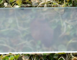 Revestimento do rolo geado moderado/vidro temperado para o chuveiro