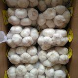 새로운 작물 신선한 중국 순수한 백색 마늘 (5.0cm, 5.5cm, 6.0cm)