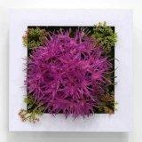 Succulent 플랜트 구 Jy17091843의 인공적인 플랜트 그리고 꽃
