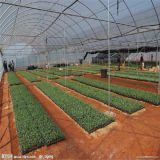 EU 모형 다중 경간 필름 농업 온실