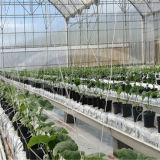 야채를 위한 열대 다중 경간 온실