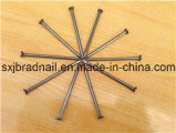 도매 기계설비 중국에 있는 일반적인 못 철 못