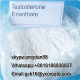 Aufbauendes Steroid-Puder-Testosteron Enanthate für fetten Burning CAS: 315-37-7