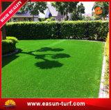 ヤードの庭の装飾的な草のカーペット