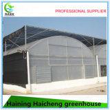 Casa verde de la película hidropónica de Multispan para la fresa