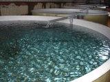 물고기 농장 - 양식을%s FRP 또는 섬유유리 어항