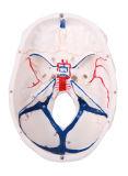 Людской череп с кровью Vesseles