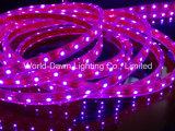 CE EMC LVD RoHS dos años de garantía, luz de tira rosada flexible SMD3528/5050 del LED con CE& RoHS