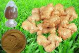 Extrait direct 5% Gingerols de racine de gingembre d'approvisionnement de constructeur