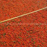 Аттестованная мушмулой ягода Gojivberry органическая Goji