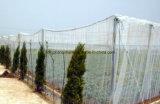 Парник ловя сетью анти- сеть насекомого мухы для огородов