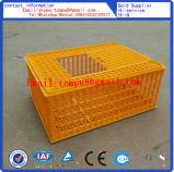Huhn-Plastiktransport-Rahmen/Huhn-Umsatz-Kasten