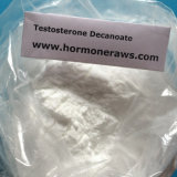 Testosteron Decanoate Steroid aufbauendes Puder-Testosteron Decanoate