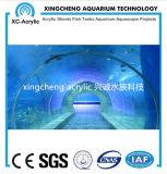 Langer Acryltunnel im Aquarium mit transparentem Acrylpanel