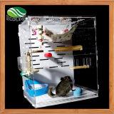 Panneau écologique et habitat acrylique avec des décorations pour animal familier de Totoro d'écureuil le petit