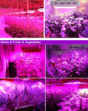 2017 LED Grow Light for guards Greenhouse plan