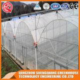 Serra di plastica a un solo strato di agricoltura con il sistema di raffreddamento