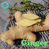 Estratto dello zenzero, Gingerols
