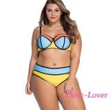 Цветастое живое Colorblock плюс Swimsuit размера