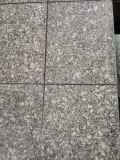 La Cina Butterfly Green Granite per Building