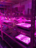 Evergrow 무용담 LED는 바꿀 수 있는 LED가 실내 증가를 위한 빛을 증가하는 빛 840W를 증가한다
