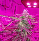 lo spettro completo LED di 300W 4COB si sviluppa chiaro per la serra/pianta di Medinical