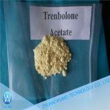 Legit 대략 완성되는 기름은 스테로이드 Tren 아세테이트 Trenbolone 아세테이트 100mg/200mg의 기초를 두었다