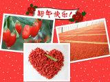 ISO 9001の乾燥したフルーツ--Gojiの果実