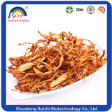 Tabuletas Certificated do extrato de Cordyceps Sinensis