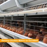 Gaiolas automáticas das aves domésticas para galinhas da camada