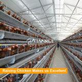 Hochwertiges Geflügel-Gerät ein Typ Batterie-Huhn-Rahmen für Schichten