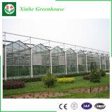 花成長するのために使用されるガラス温室