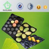 Plástico disponible PP que empaqueta las bandejas para la fruta y verdura